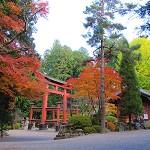 北口本宮冨士浅間神社の紅葉(黄葉)