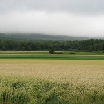 日本は世界5位の農業大国