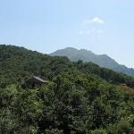 八海山と、津南のひまわり