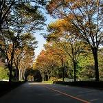 多摩地域の紅葉